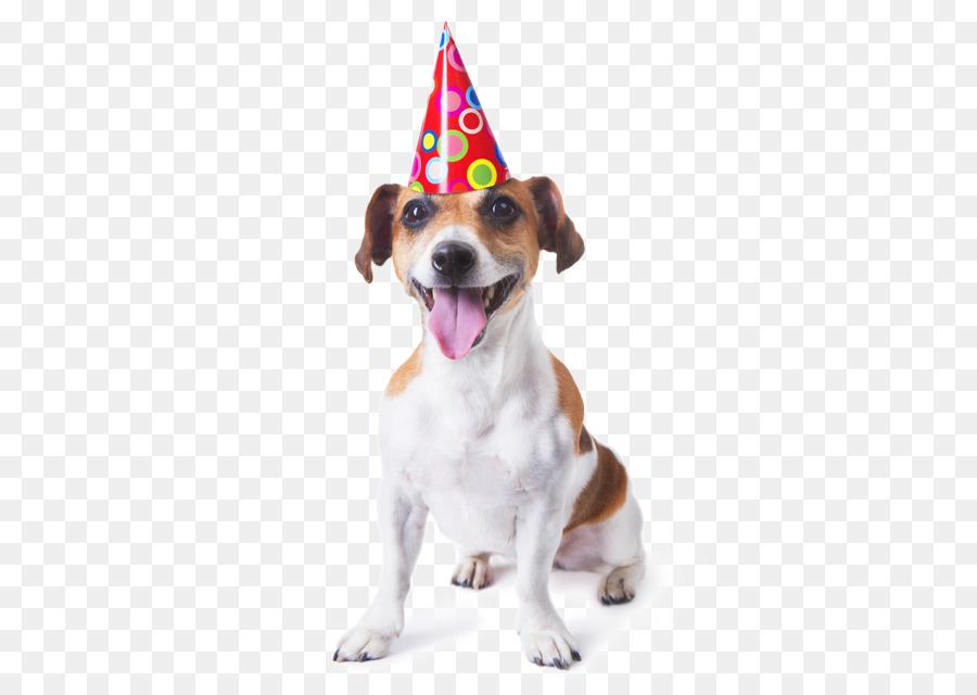 Puppy Maltese Dog Golden Retriever Birthday Greeting Note Cards