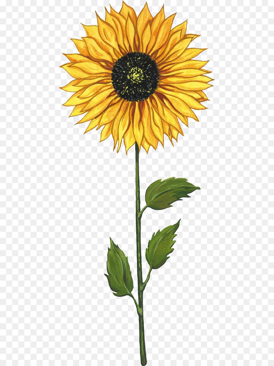 Flower Plant png download - 513*1200 - Free Transparent Common