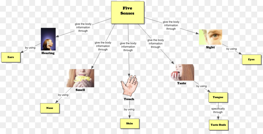 The Five Senses Graphic Organizer Concept Map Hearing Others Png