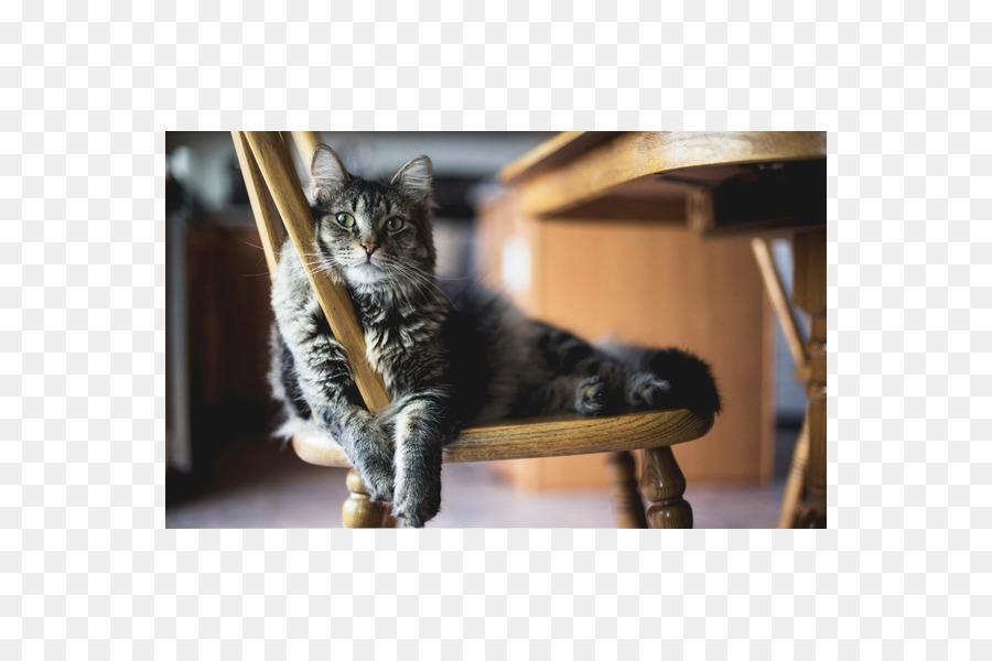 9100 Gambar Binatang Kucing Kecil Gratis
