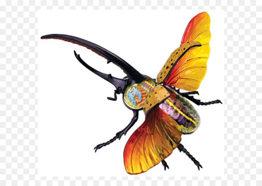 El escarabajo hércules de la Anatomía del cuerpo Humano Anatomia de ...