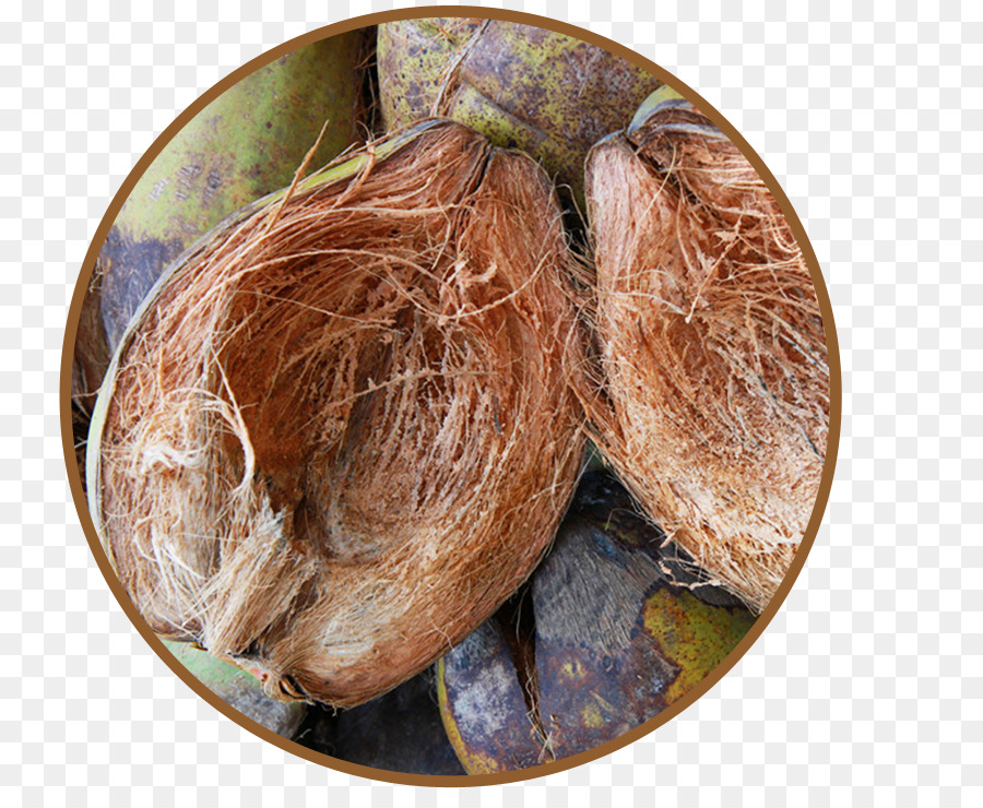 coconut husk Hortscience, vol 34(1), february 1999 89 determined by separating particles of 100-g samples with a csc scientific (fairfax, va) rotary shaker for 10 min using screen sizes of 80 and 63 mm short fibers remaining in the.