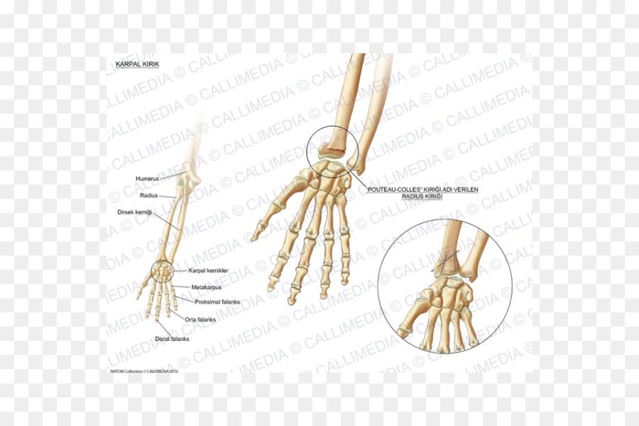 Fractura de huesos del Carpo de la Muñeca hueso Pisiforme - El Hueso ...