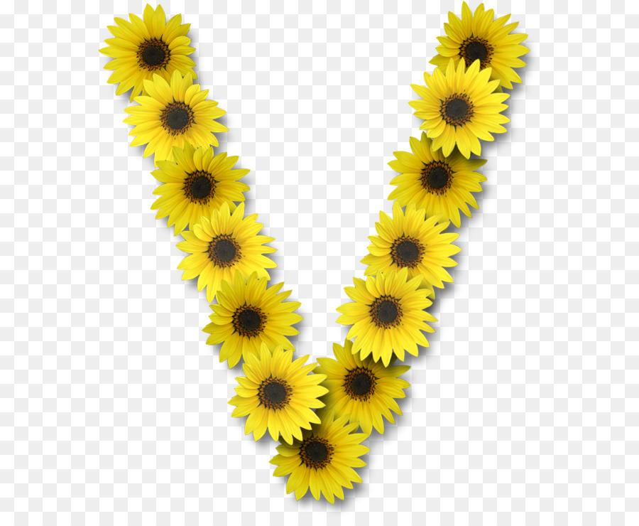 Common sunflower letter v alphabet flower png download 623730 common sunflower letter v alphabet flower thecheapjerseys Gallery