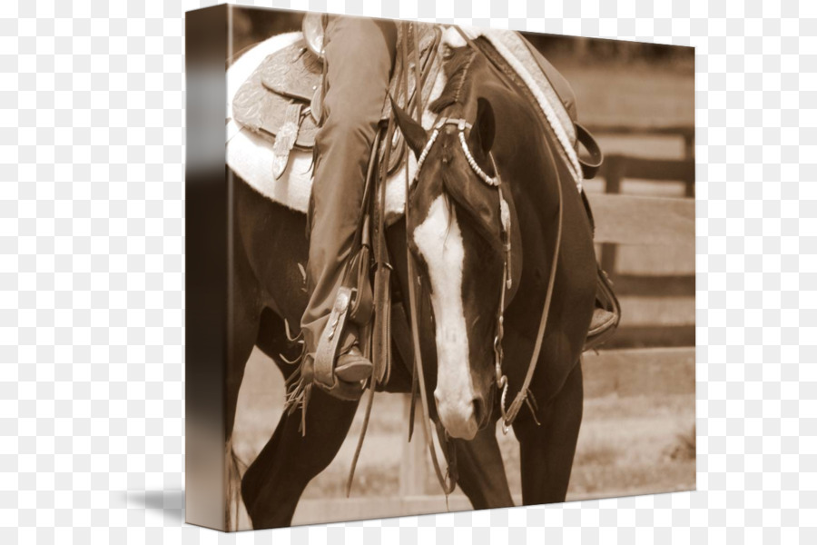 Papier Cartes De Visite Cheval Carte Zazzle