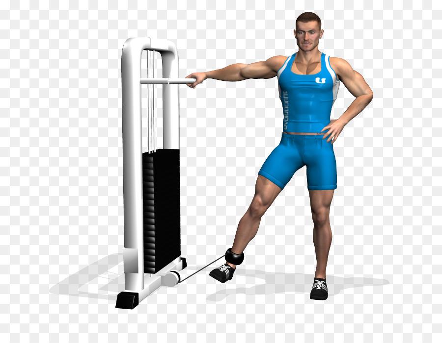 El ejercicio del Aductor de la gran músculo Glúteo mayor de la ...