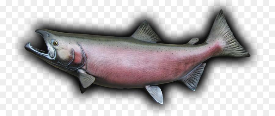 El salmón Coho salmón Chinook aceite de pescado - los peces Formatos ...