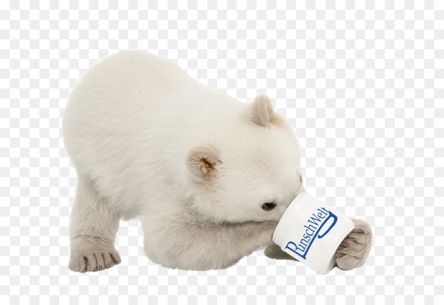Polar Bear Puppy Stock Photography Dog Polar Bear Png Download