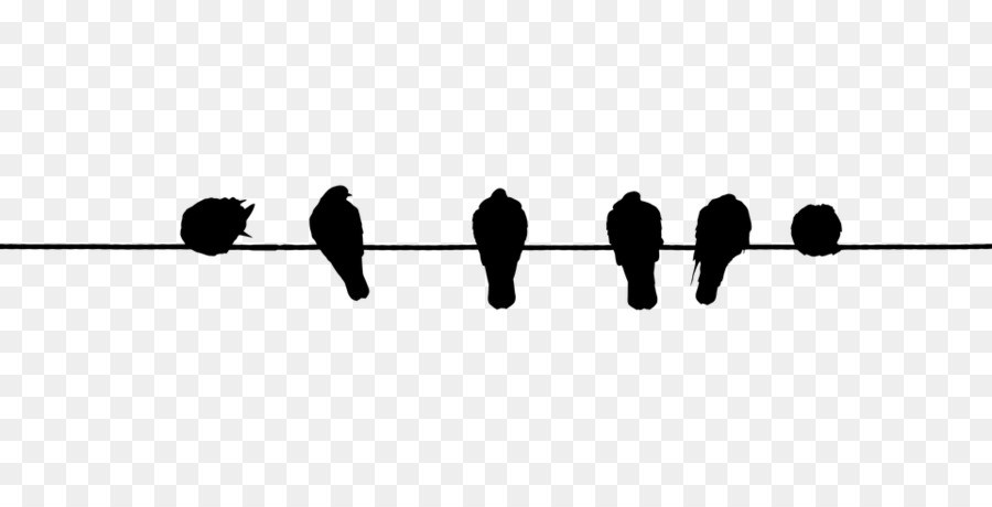 Bird Wire Electrical cable Domestic pigeon Clip art - birdsonawire ...