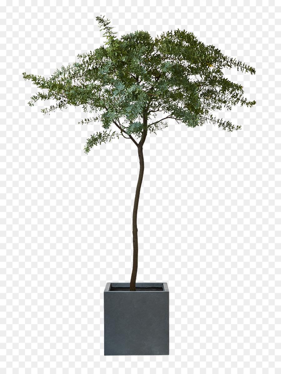 oleander zimmerpflanze obi strauch - anlage png herunterladen - 800