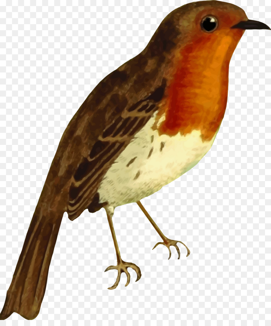 Bird robin. Png download free transparent