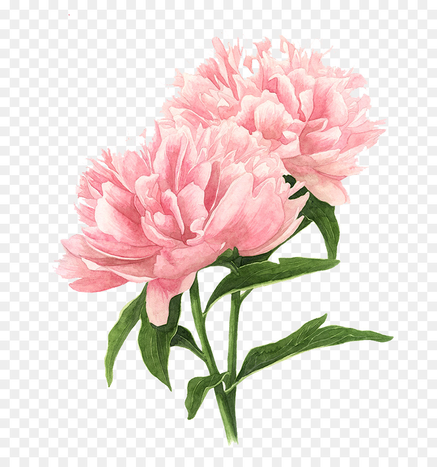 Flower Drawings Tree Peony Watercolor Painting Painting Png