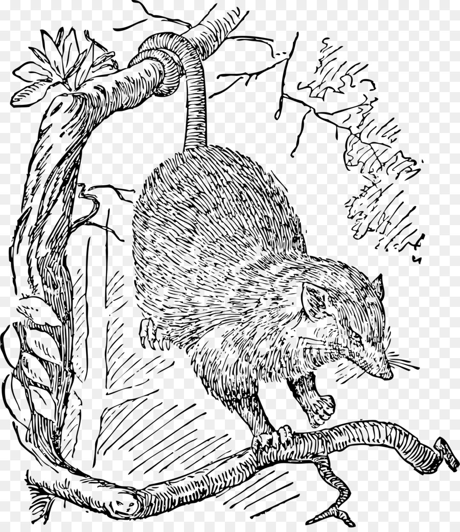 Opossum Phalangeriformes Drawing Clip Art Others Png Download