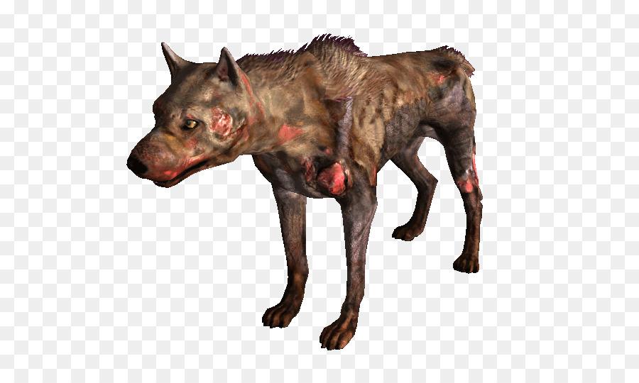 40++ Anjing liar di gurun terupdate