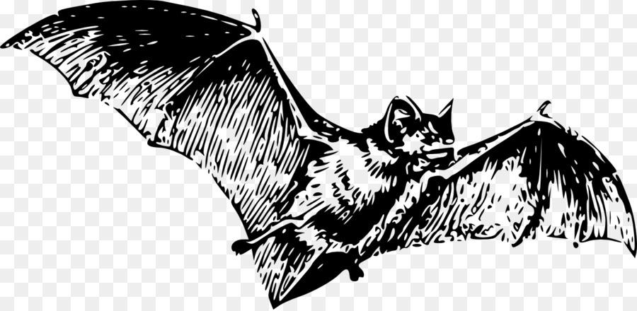 bat drawing clip art bat png download 1280 623 free