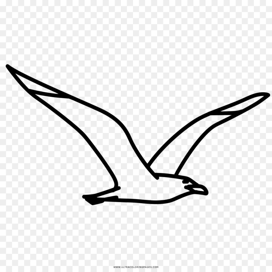 Buku Mewarnai Gambar Burung Camar Kyanite Camar Clipart