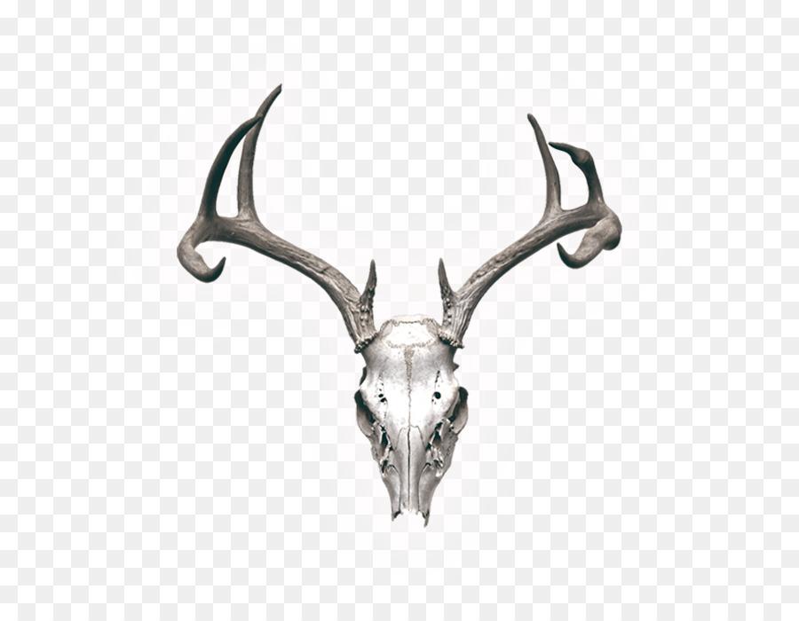 Reno Cráneo de la fotografía de Stock Cuerno - los ciervos Formatos ...