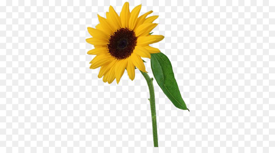 Umum Bunga Matahari Clip Art Bunga Kolase