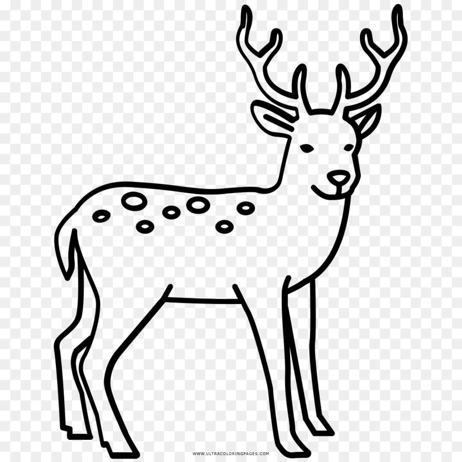 De renos, Alces ciervo Rojo para Colorear libro - Reno png dibujo ...