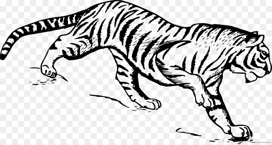 Drawing Line Art Sketch White Tiger Png Download 22231177