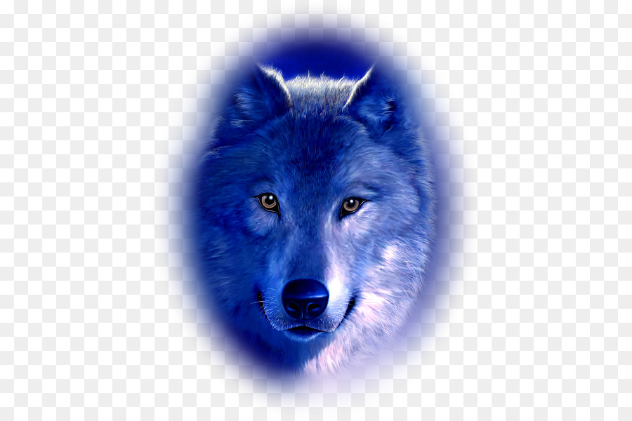 Hund Arctic Wolf Baby Wolf Black Wolf Hund Png Herunterladen 471
