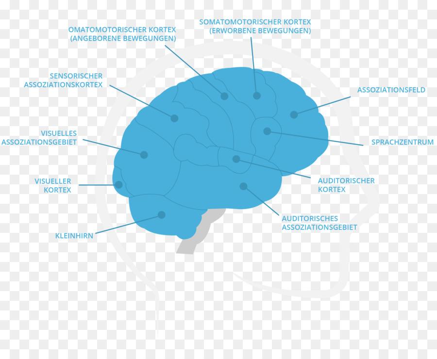 Cerebro Diagrama Organismo - Cerebro Formatos De Archivo De Imagen ...