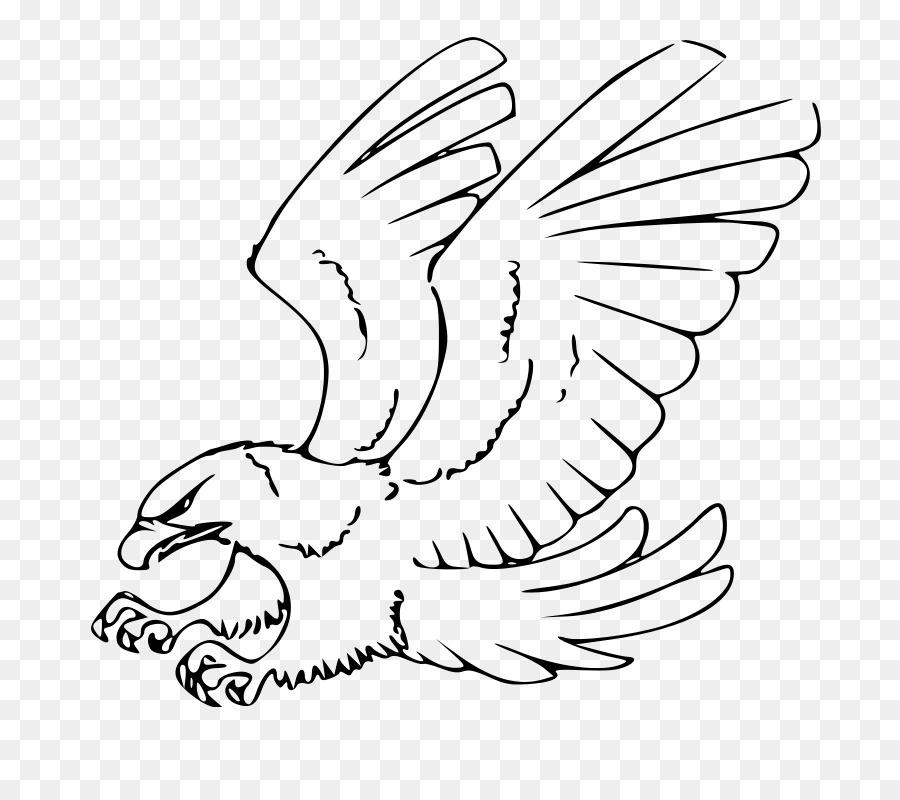 Dibujo De Águila Calva Croquis - águila png dibujo - Transparente ...