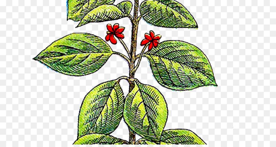 Blatt Kraut Rosmarin Pflanzen Schnittblumen Blatt Png