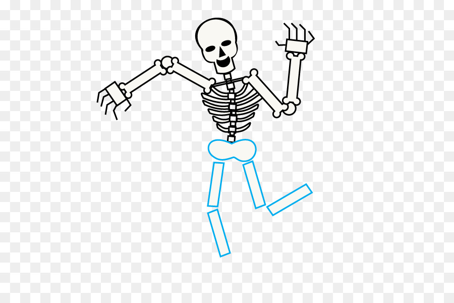Human Skeleton Drawing Cartoon Bone Skeleton Png Download 678