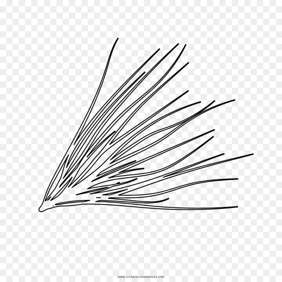 Dibujo de una hoja de Pino libro para Colorear en Línea de arte ...