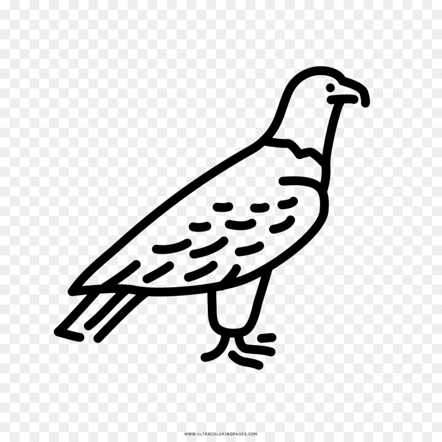 El pico de Dibujo de Águila libro para Colorear de Aves - águila ...