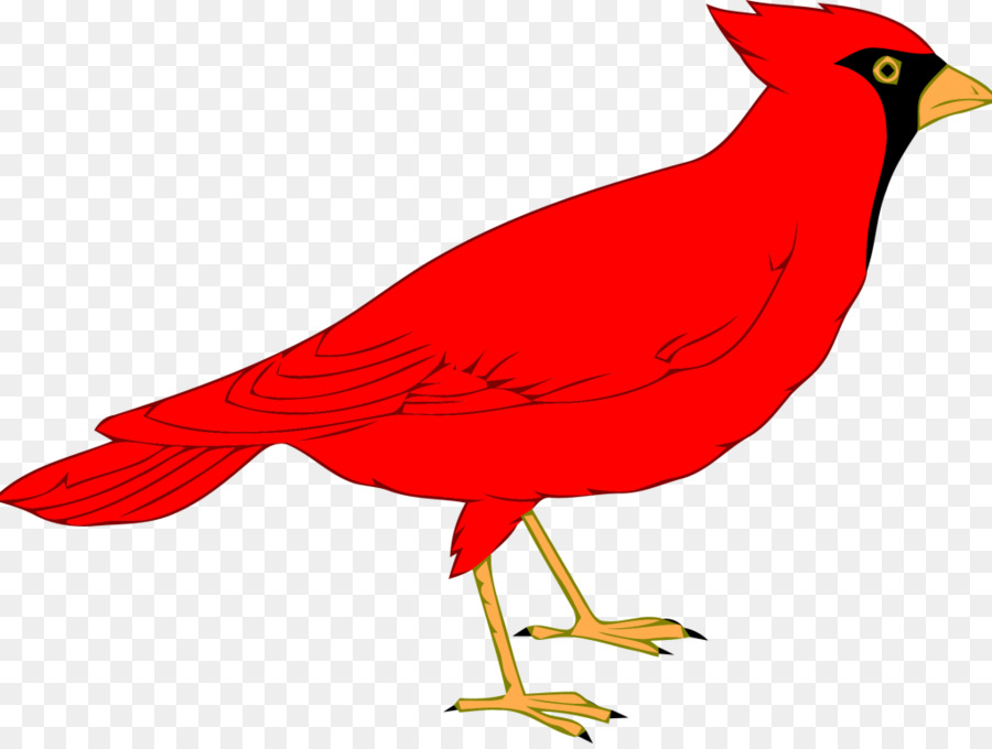 northern cardinal st louis cardinals clip art others png download rh kisspng com cardinal clip art cardinal clip art free images