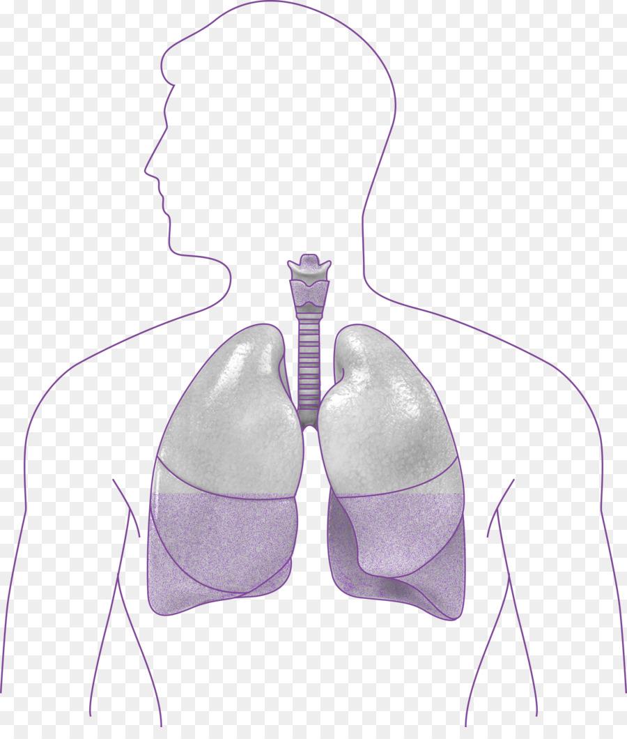 Hombro - los Pulmones humanos Formatos De Archivo De Imagen - 2093 ...