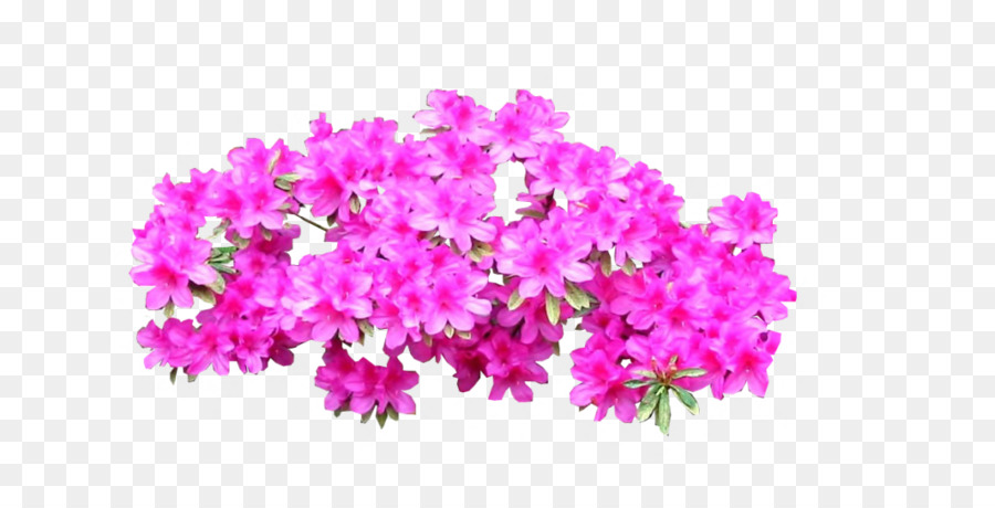 Azalea plant shrub tree bright pink png download 900450 free azalea plant shrub tree bright pink mightylinksfo