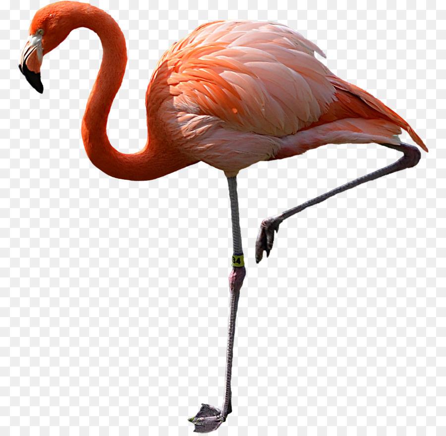 flamingo pássaro clip art flamingo transparente flamingo água