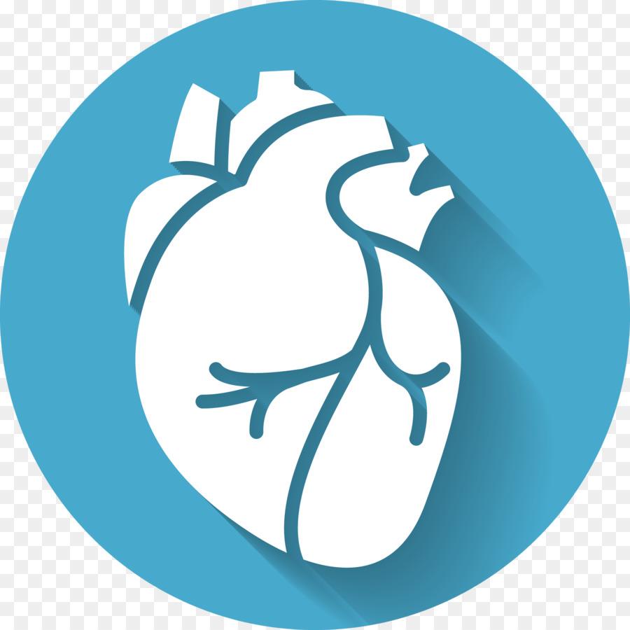 Los sonidos del corazón de la Anatomía de la Medicina - corazón png ...
