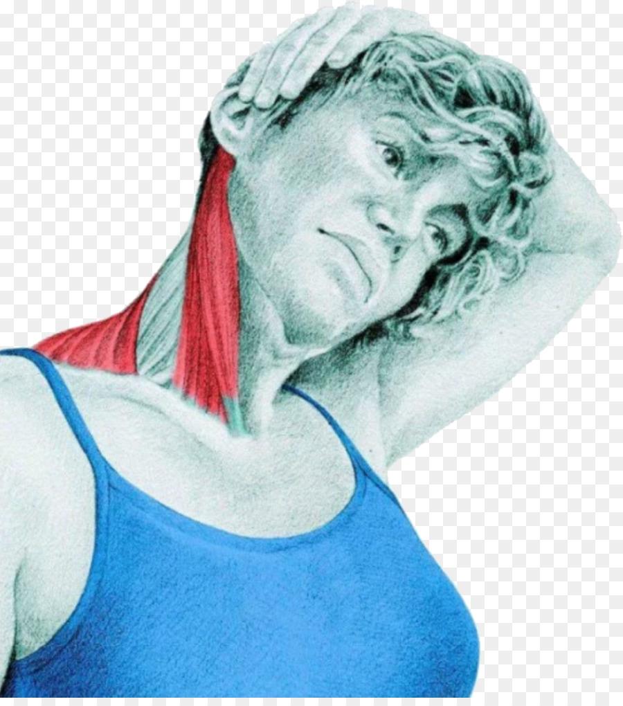 Stretching Sternocleidomastoid Muscle Trapezius Neck Trapezius