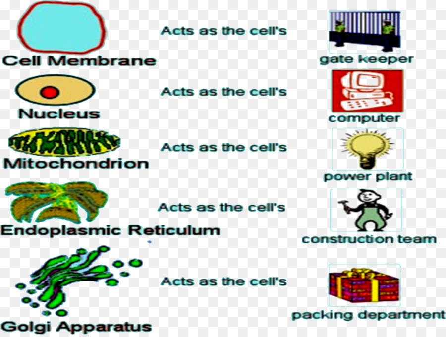 Cell biology Science Microfilament - science png download