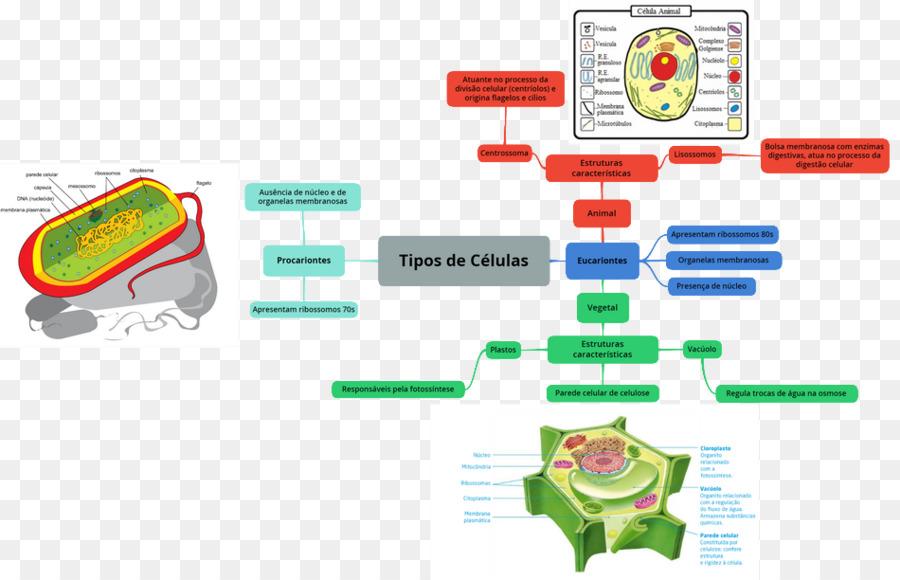 Graphic Design Bacteria Diagram Organism Engenharia Png Download
