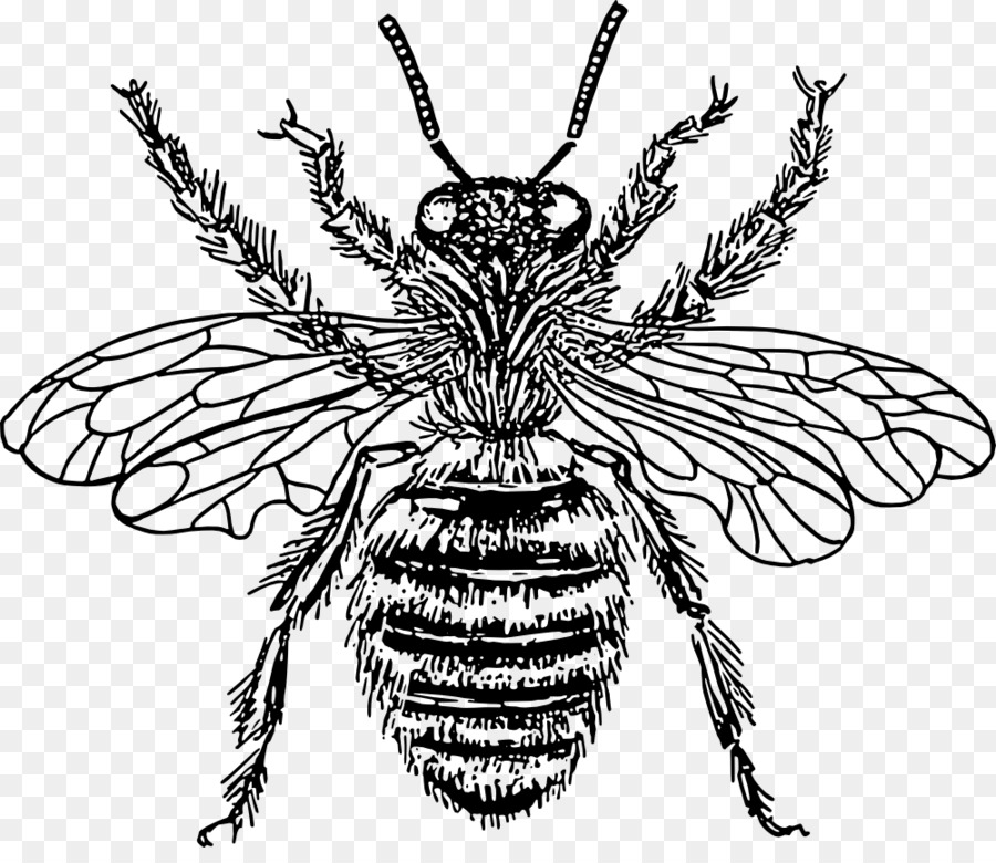European Dark Bee Queen Bee Drawing Clip Art