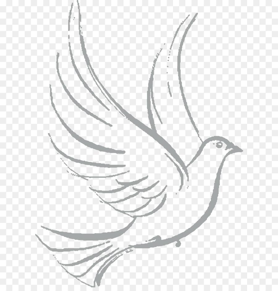 Columbidae Gambar Burung Merpati Sebagai Simbol Sketsa Merpati