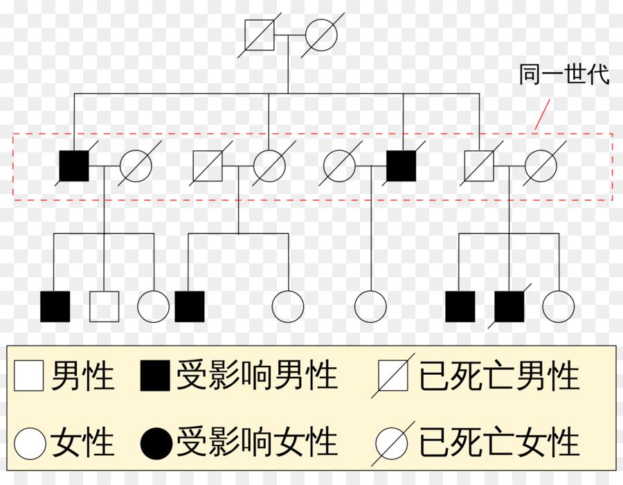 Pedigree Chart Genetic Disorder Klinefelter Syndrome Genetics