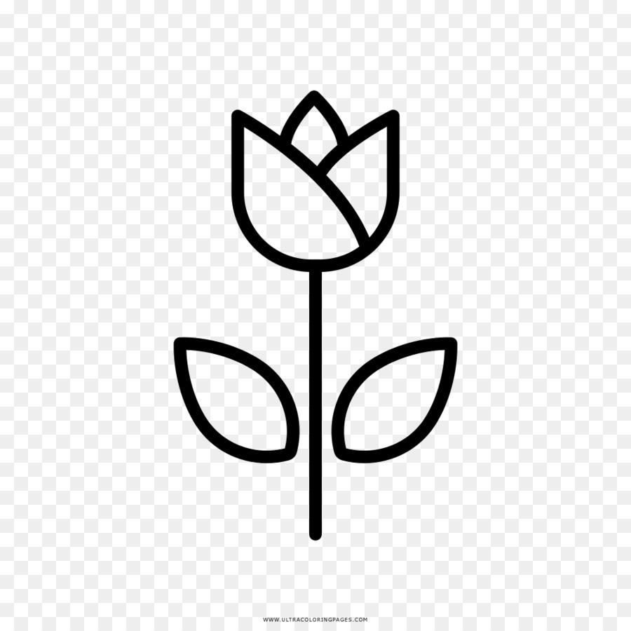 Lale Boyama Kitabı çiçek Blume çizim Lale Png Indir 10001000