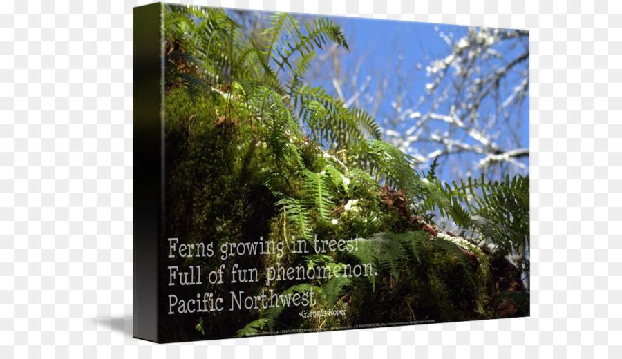 paper canvas print printing art fern border png download 650 503