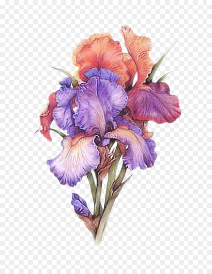 Irises Watercolor Painting Watercolour Flowers Art Painting Png