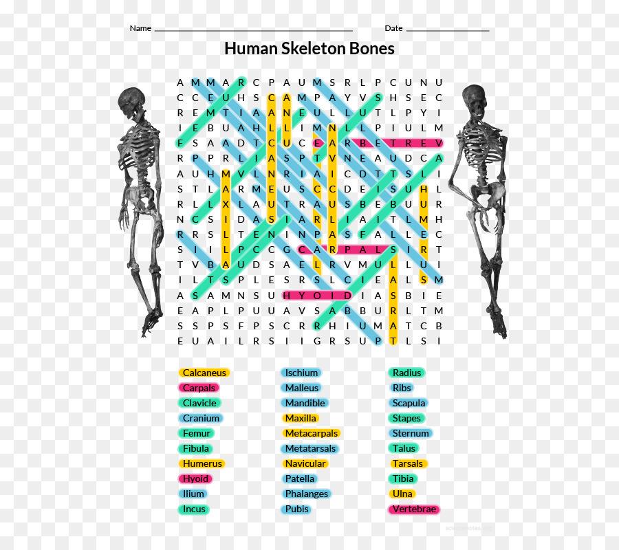 Homo Sapiens Human Anatomy Physiology Human Skeleton Word Search