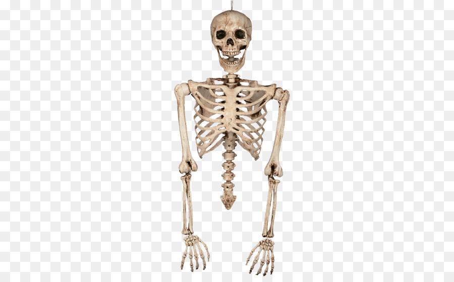 Human skeleton Bone Arm Human body - Skeleton png download - 555*555 ...