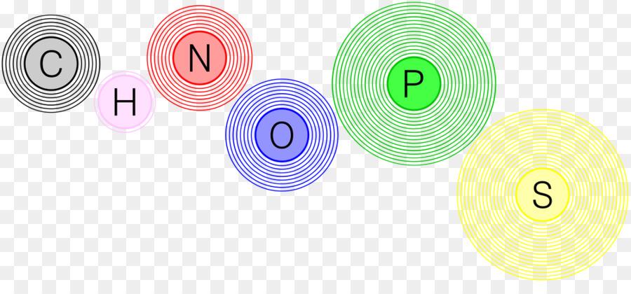 Chon Nitrogen Hydrogen Carbon Chemical Element Symbol Png Download