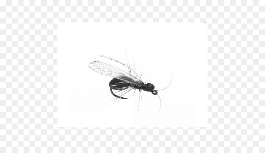 Insekt Schwarzer Garten Ameise Künstlichen Fliege Ailee Insekt Png
