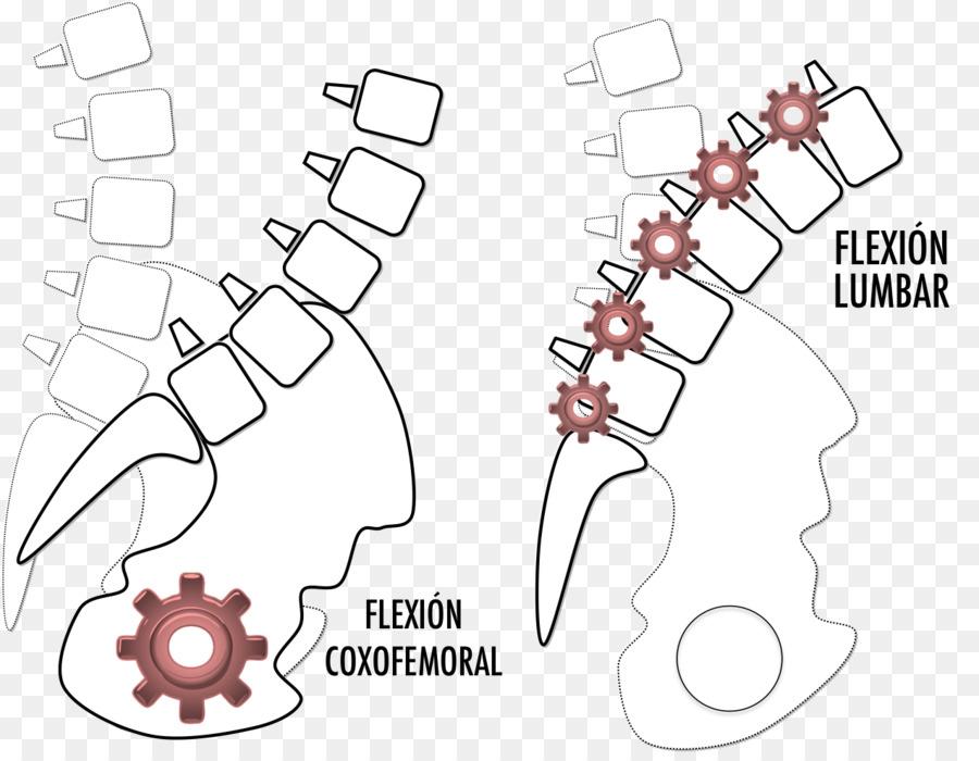 Las vértebras lumbares de espalda Baja, dolor en el Abdomen - diseño ...